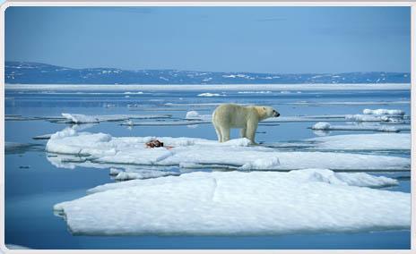 A_polarbearimage
