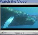 Whales_movie